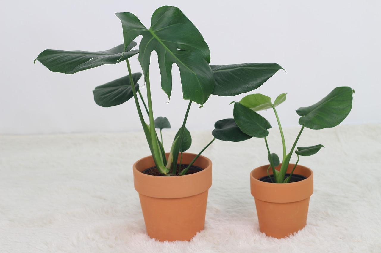 planten eetkamertafel